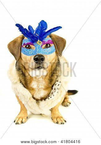 dog and mask