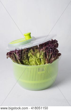Plastic Green Salad Spinner For Drying Lettuce Leaves And Herbs. A Fresh Bunch Of Green Salad For A