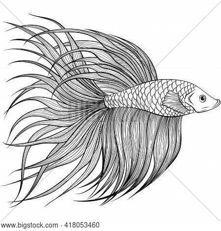 Betta Fish Or Siamese Fighter Fish Side View In Hand Drawn Line Art Style. Decorative Goldfish Veilt