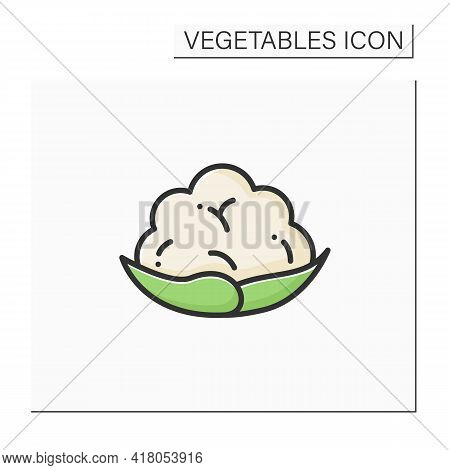 Cauliflower Color Icon. Edible Vegetable.dietary Food. Vegetarian, Healthy Nutrition. Health Benefit