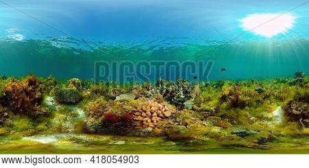 Tropical Coral Reef. Scene Reef. Marine Life Sea World. Underwater Fish Reef Marine. Philippines. Vi