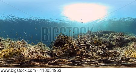 Colourful Tropical Coral Reef. Tropical Coral Reef. Underwater Fishes And Corals. Philippines. Virtu