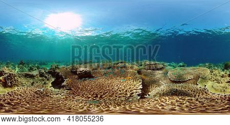 Coral Reef Underwater With Fishes And Marine Life. Coral Reef And Tropical Fish. Philippines. Virtua