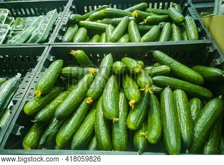 Selling Ripe Cucumbers At A Grocery Supermarket.