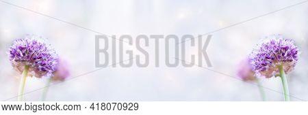 Unfocused Widescreen Background With Purple Decorative Onion Inflorescences. Art Design, Banner