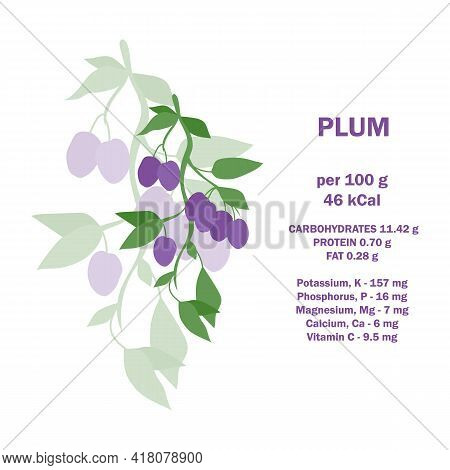 Infographic Card About Calories Of Plum 100g. Vitamins, Minerals And Calorie Content. Vector Flat He