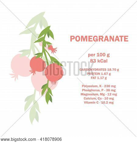 Infographic Card With Calories Of Pomegranate 100g. Vitamins, Minerals And Calorie Content. Healthy