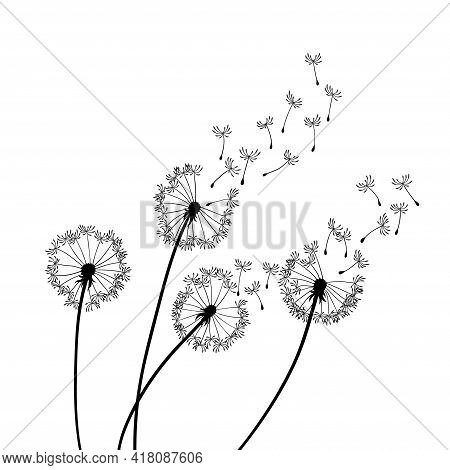 Dandelion Wind Blow Background. Black Silhouette With Flying Dandelion Buds On A White. Abstract Fly