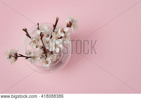 Vase With Blooming Branches Of An Apricot Tree. Vase With White Flowers On Pink Background