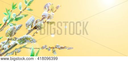 Spring Background May Flowers And April Floral Nature On Yellow Background. Branches Of Blossoming A