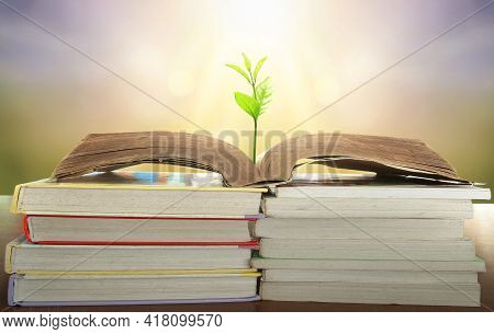 World Philosophy Day Education Concept: Tree Of Knowledge Planting On Opening Old Big Book In Librar