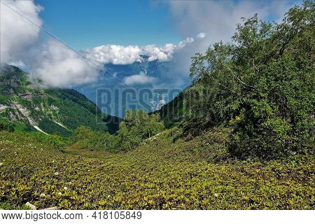 There Are Areas Of Snow On The Slopes Of The Mountains. In The Valley There Is A Glade With Rhododen