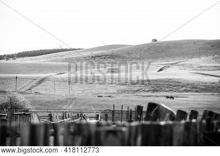 Some Horses On A Green Hill At One Spring Day. Black And White