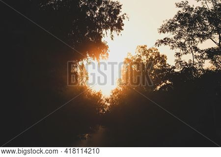 Sunbeam Emerging Out Of The Trees In The Forest