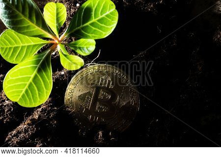How To Grow Or Get And Earn On Bitcoins. The Bitcoin Grows In The Earth As The Growth Has Taken Root
