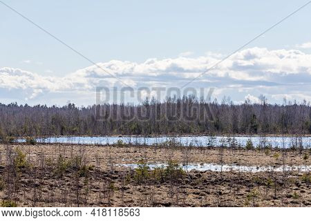 Wet Springy Squishy Peat Bog With Blue Water. Latvian Swamp During Early Spring. Wet Marsh At Sunny