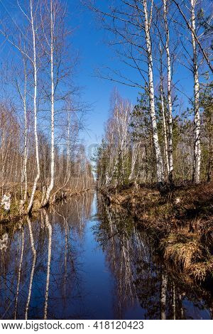 Leafless Birch Trees Reflecting In Blue Water In Ditch.
