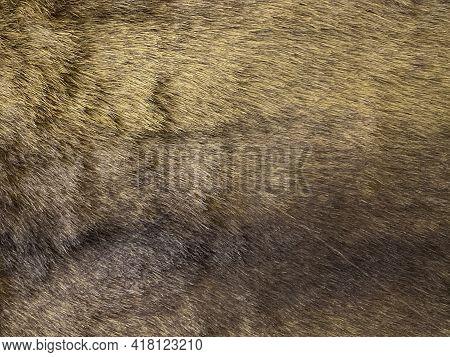 Real Fur Animal Skin - Pattern Or Texture