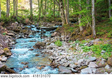 River In The Beech Forest. Summer Nature Scenery On A Sunny Day. Rapid Water Flows Among The Rocks.