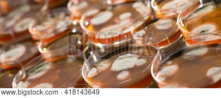 Petri dish with colonies of bacteria and fungi