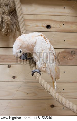 The Close-up Of A White Bird In A Cockatoo Parrot Nursery
