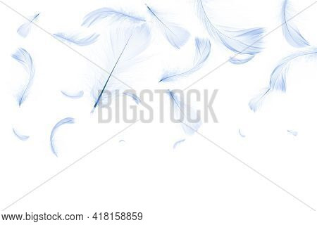 Feather Falling. Nature Abstract Bird Feather Texture Closeup Falling On White Background For Patter