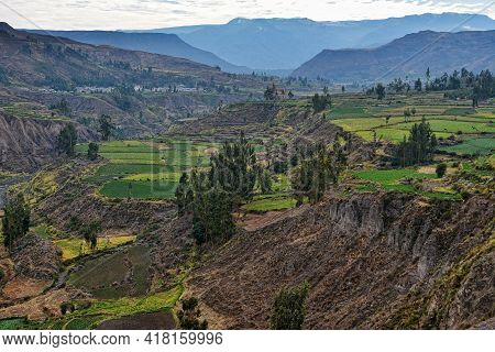 Agricultural Terraces In Colca Valley In Peru. View Over Colca Valley In Peru.