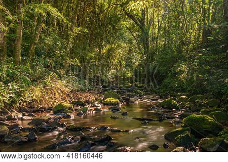 Stream In The Forest With Stone And Plants