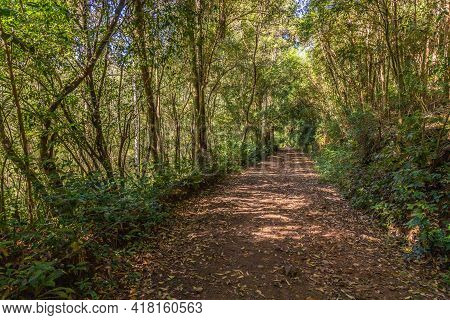 Dirty Road In A Green Tunnel With Trees Around, Ivoti, Rio Grade Do Sul, Brazil
