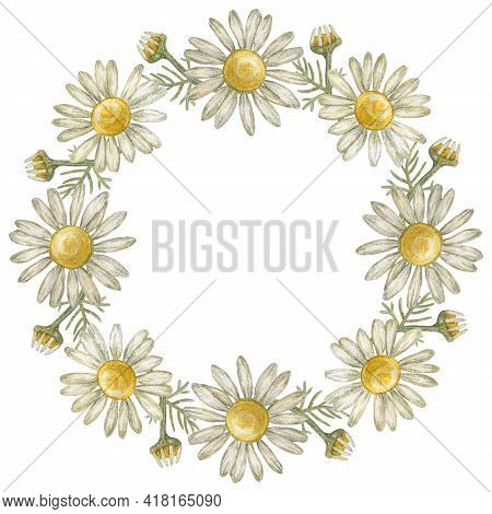 Wreath, Frame With Flower Chamomile. Pharmacy Chamomile. Watercolor Illustration.