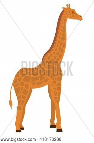 Giraffe In Flat Style. Vector Illustration Isolated On The White Background. African Animals. Wild A