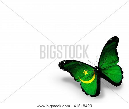 Mauritanian Flag Butterfly, Isolated On White Background