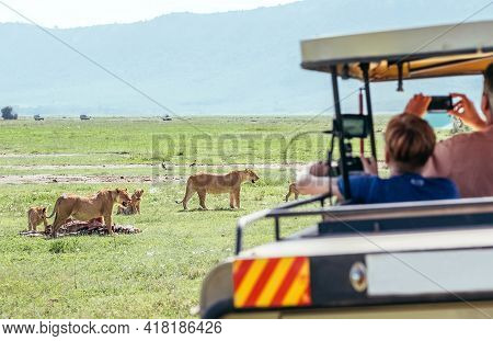 Two Lionesses With Zebra-pray Meat Remainings And Lion Cubs. Safari Vehicle Passengers Taking Photos