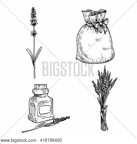 Lavender Sketch Set. Single Lavender Stem With Flowers, Bag With Lavender, Bouquet And Lavender Oil