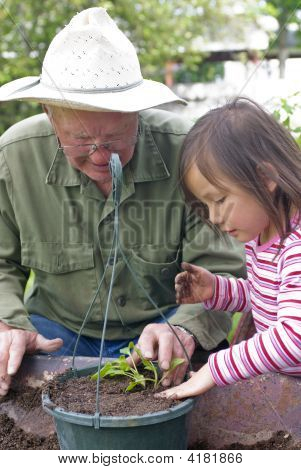Planting Flowers With Grandpa