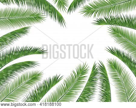 Tropical Palm Leaves Frame Botanical Vector Illustration. Exotic Nature Card Or Banner With Frame Fo
