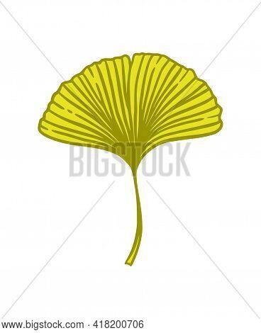 Ginkgo Or Gingko Biloba Leaf. Nature Botanical Vector Illustration, Herbal Medicine Graphic In Yello