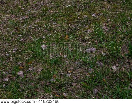 Forest Ground With Green Moss And Grass Texture. Background Of Leaves On The Ground