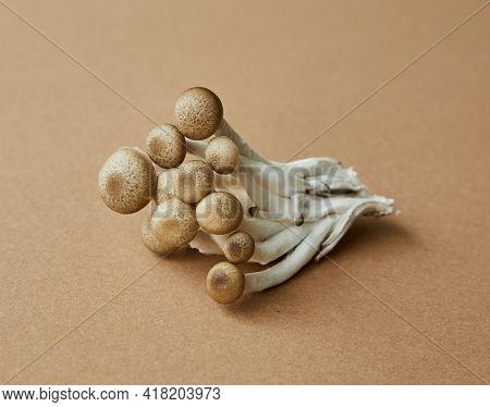Tasty And Delicious Mushrooms Fresh And Healthy Food New Picture Organic Closeup Diet Forest Food Pl