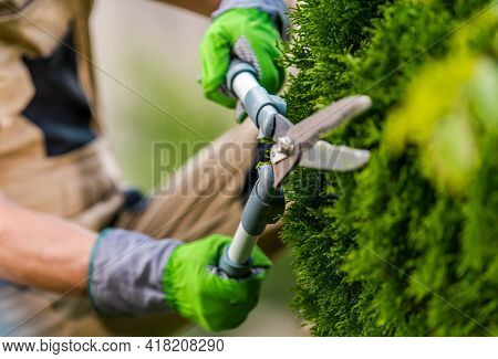 Landscaping And Gardening Worker With Scissors In His Hands Trimming Plants Close Up.