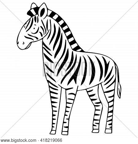 Vector Image With Zebra In Doodle Style. Zebra For Coloring.