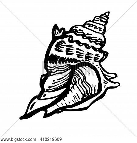 Marine Fauna Shell Seashell Live Line Style Hand Drawn Black Ink. Amazing Inhabitant Of The Seabed,