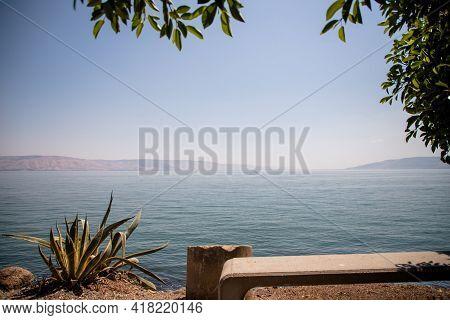 Coast Of Sea Of Galilee, Water And Plants. Israel