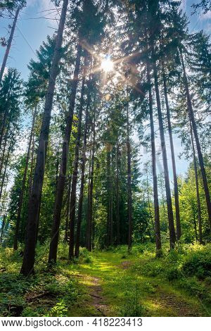 Mixed Forest On The Sunny Summer Day. Grassy Ground In Dappled Light. Freshness Of The Carpathian Wo