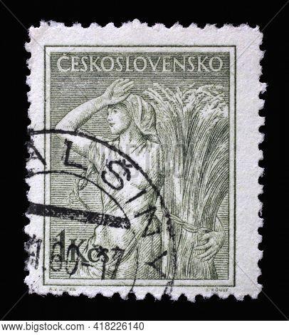 ZAGREB, CROATIA - SEPTEMBER 18, 2014: Stamp printed in Czechoslovakia shows Woman bundling grain, Professions series, circa 1954
