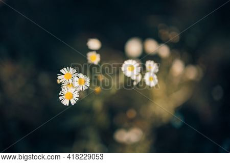Dream Morning Sunlight Nature Outdoors, Close-up Macro. Magic Beautiful Floral Spring Abstract Backg