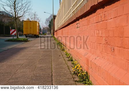 Soft Focus Of A Common Dandelion Blooms In Spring Along The Brick Fence In The Foreground. Blurred D