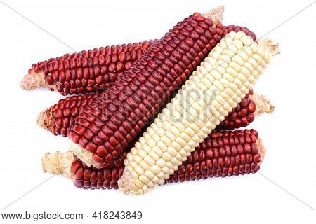 Red And White Corn Isolated On A White Background.ruby King Cobs Or Red Sweet Corn Cobs. Corn Seeds