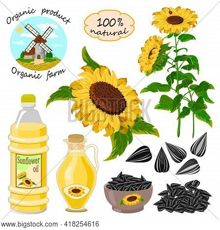 Vector Set With Sunflowers And Oil.sunflowers, Seeds And Oil In Bottles On A White Background In Vec