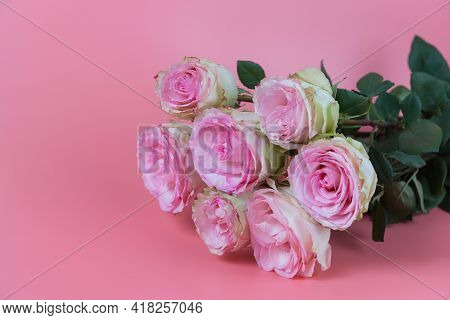 A Delicate Bouquet Of Beautiful Roses On A Pink Background. A Declaration Of Love